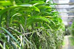 Orchideegarten lizenzfreies stockbild