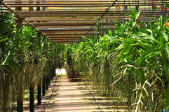 Orchideegarten lizenzfreie stockfotografie