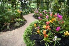 Orchideegarten Lizenzfreies Stockfoto