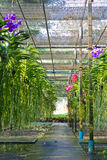 Orchideehaus Lizenzfreie Stockbilder