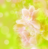 Orchideehintergrund Lizenzfreies Stockfoto