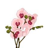 Orchideeillustratie Royalty-vrije Stock Afbeelding