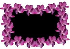 Orchideekader Royalty-vrije Stock Afbeeldingen