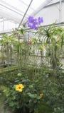 Orchideelandbouwbedrijf Royalty-vrije Stock Foto