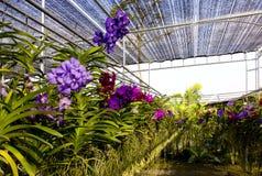 Orchideelandbouwbedrijf Royalty-vrije Stock Fotografie