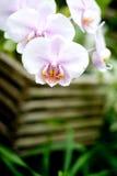 Orchideen Lizenzfreies Stockbild