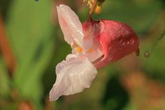 Orchideen Lizenzfreie Stockfotos