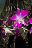 Orchideen. Lizenzfreies Stockfoto
