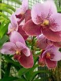 orchideen stockfoto
