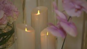 orchideen stock video