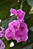 orchideen Stockbild