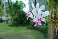 orchideen Lizenzfreie Stockfotografie