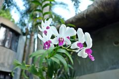 orchideen Stockbilder