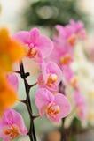 orchideen Lizenzfreies Stockfoto