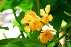 Orchideen 5 Stockfotos