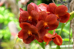 Orchideen 2 lizenzfreie stockfotografie
