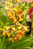 Orchideen-Blumen Stockbild