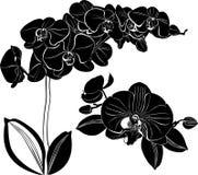 Orchideen-Blumen lokalisiert auf weißem Hintergrund Lizenzfreies Stockfoto