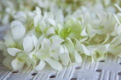 Orchideen-Blumenblätter Stockfotos