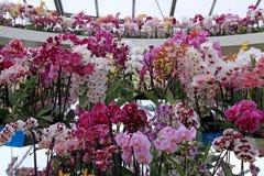 Orchideen in den Blumentöpfen auf Blumenschau Lizenzfreies Stockfoto