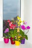Orchideen in den Potenziometern Stockfotografie