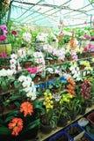Orchideen in den Töpfen auf einem Regal Stockfotos