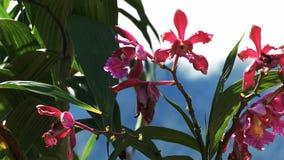 Orchideen, die an den Ruinen an machu picchu wachsen stock video