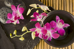 Orchideen in einer Zen-Umgebung Stockbild