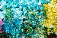 Orchideen für Verkauf stockfoto