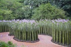 Orchideen-Garten Lizenzfreies Stockfoto