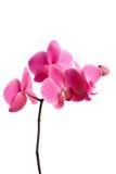 Orchideen-Grenze Stockfotos