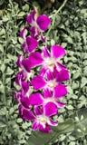 Orchideen im Garten Stockfoto