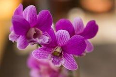 Orchideen im Hinterhofgarten sind schöne Farben Lizenzfreies Stockfoto
