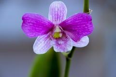 Orchideen im Hinterhofgarten sind schöne Farben Stockfotografie
