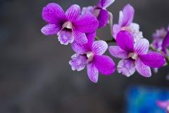 Orchideen im Hinterhofgarten sind schöne Farben Lizenzfreie Stockbilder