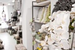 Orchideen im Shop Lizenzfreies Stockbild