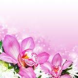 Orchideen mit Chrysanthemen Lizenzfreie Stockfotografie