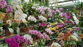 Orchideen-Park Stockfotografie