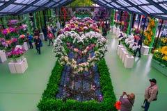 Orchideen und bunte Frühlingsblumen im Blumenladen, die Niederlande stockfoto