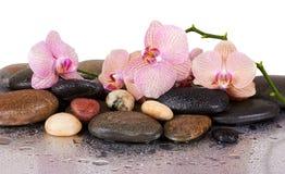 Orchideen und nasse schwarze Steine Stockfotos