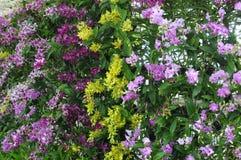 Orchideen-Wand Lizenzfreies Stockbild