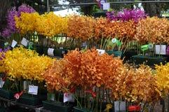 Orchideen-Wettbewerb Stockfotos