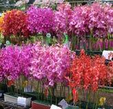 Orchideen-Wettbewerb Stockbilder