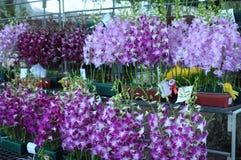 Orchideen-Wettbewerb Stockbild