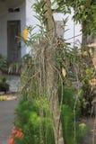 Orchideenanlage Lizenzfreie Stockbilder