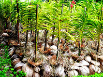 Orchideenanlagen Lizenzfreies Stockfoto