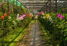 Orchideenbauernhof Stockbild