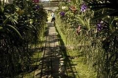 Orchideenbauernhof Lizenzfreie Stockfotografie