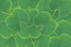 Orchideenbaum-Blatthintergrund Lizenzfreies Stockbild