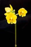 Orchideenblüte Stockfoto